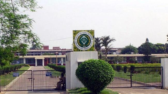 bangladesh rice research institute 1