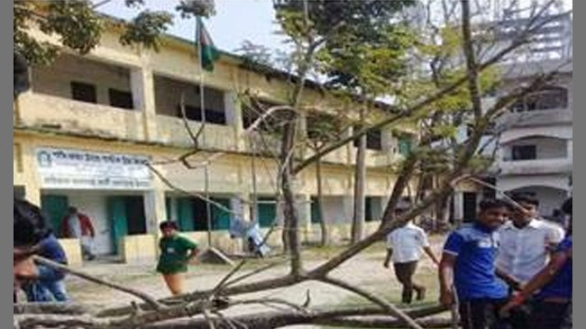 broke tree in school