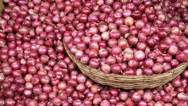 indian onion 1
